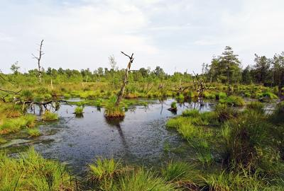 pid045_Foto4 Gewässer Dorumer Moor
