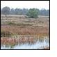 Naturschutzgebiet Ahlen-Falkenberger Moor